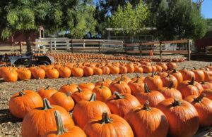 pumpkin1a