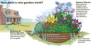 How-Rain-Garden-works4